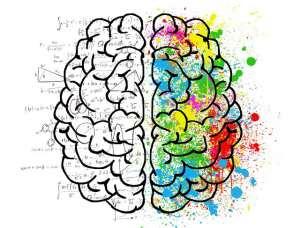 hersenen brein programma