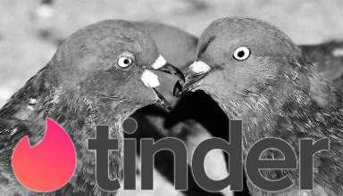 tinder duiven