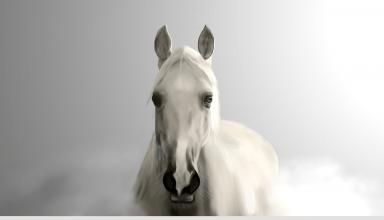 prins wit paard