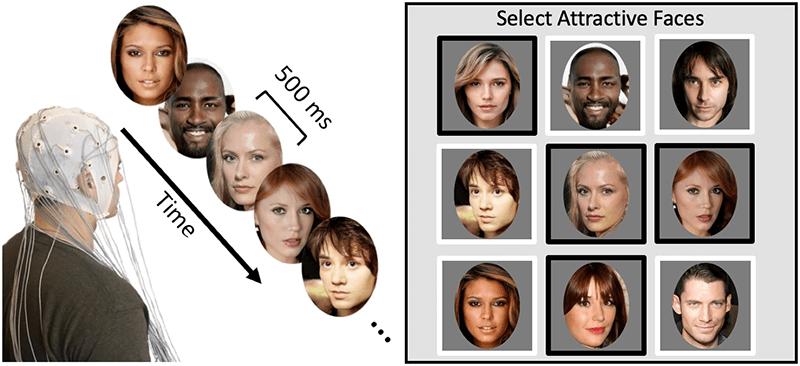 aantrekkelijke gezichten